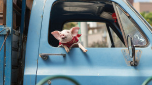 How cute is that little pig?!  He's the star of the film, as far as I'm concerned.