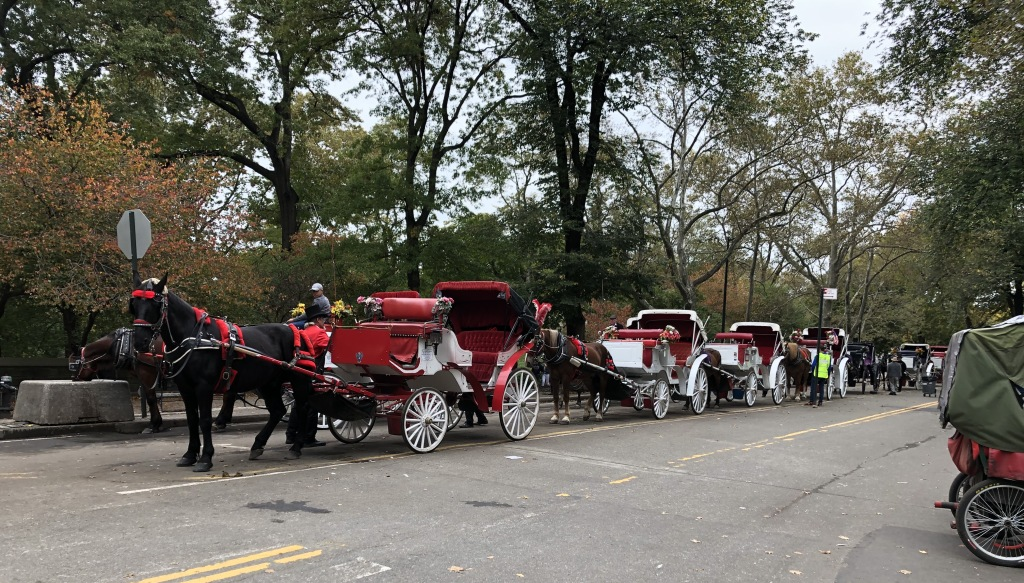 Central Park. Photo by Karen Salkin.