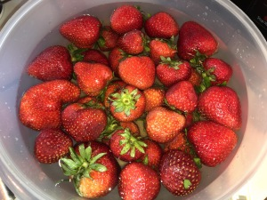 "The exact strawberries I used in my ""worm"" experiment.  (But I didn't throw them all in like that until my video was over--I didn't want to overcrowd the bowl on camera.)  Photo by Karen Salkin."
