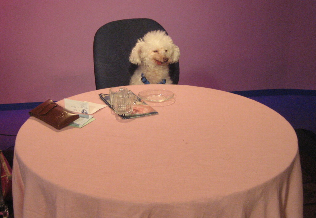 Clarence, The Singing Dog, getting his lighting set pre-taping of Karen's Restaurant Revue.  Photo by KRR staff.